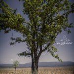 grossesse-arbre